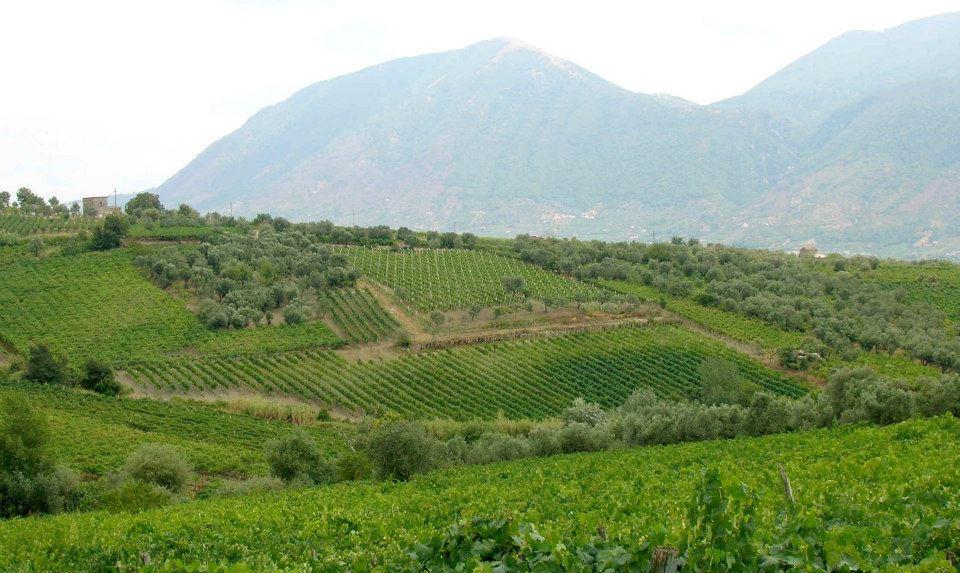 Il sogno del Professore nella valle dei grandi vini